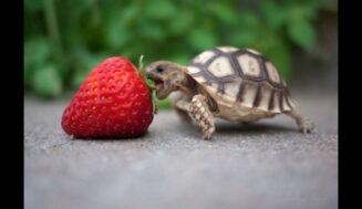 Mejores Alimentadores de tortugas automáticos