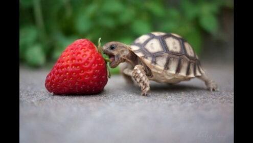 comedero tortugas