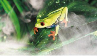 Humidificador para terrario de reptiles